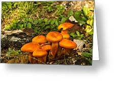 Jack Olantern Mushrooms 22 Greeting Card