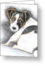 Jack Russell Puppy Greeting Card
