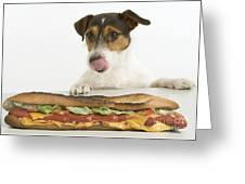 Jack Russell With Sandwich Greeting Card