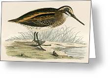 Jack Snipe Greeting Card