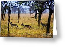 Jackals On Savanna. Safari In Serengeti. Tanzania. Africa Greeting Card