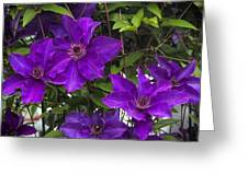 Jackmanii Purple Clematis Vine Greeting Card