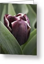 Jackpot Tulip Greeting Card