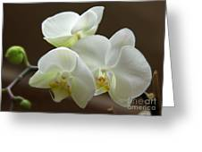 Jack's Orchids Greeting Card