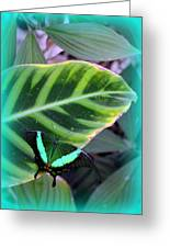 Jade Butterfly With Vignette Greeting Card by Carla Parris