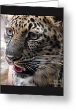 Jaguar-09498 Greeting Card
