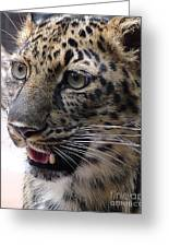 Jaguar-09499 Greeting Card