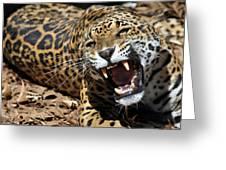 Jaguar Intensity Greeting Card