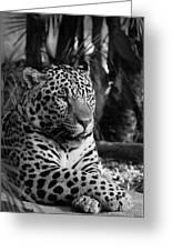 Jaguar Mono Greeting Card