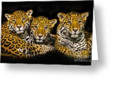 Jaguars Greeting Card