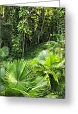 Jamaican Jungle Greeting Card