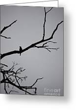 Jammer Bird Silhouette 1 Greeting Card
