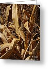 Jammer Corn Abstract 001 Greeting Card