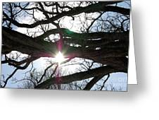 Jammer Lateralus Branching Trees Greeting Card