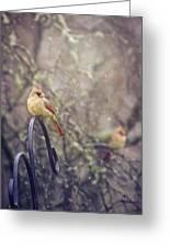 January Cardinals Greeting Card