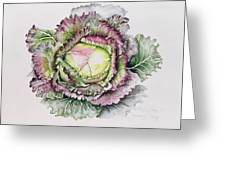 January King Cabbage  Greeting Card