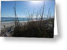 January On A Florida Beach Greeting Card