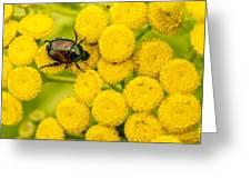 Japanese Beetle She Ruv You Ya Ya Ya Greeting Card