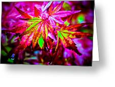 Japanese Bonfire Maple Greeting Card