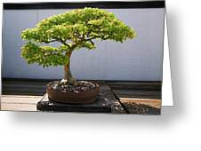 Japanese Bonsai Tree In National Greeting Card
