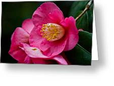 Japanese Camellia-the Official State Flower Of  Alabama Greeting Card
