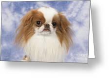 Japanese Chin Dog Greeting Card by John Daniels