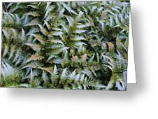 Japanese Ferns Greeting Card