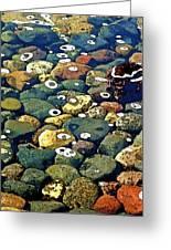 Japanese Garden Pool Rocks Greeting Card