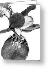 Japanese Iris Flower Monochrome Greeting Card