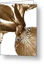 Japanese Iris Flower Sepia Brown 2 Greeting Card