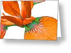 Japanese Iris Orange White Five Greeting Card