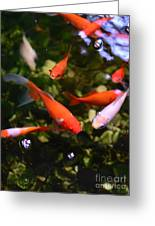 Japanese Koi Fish Greeting Card