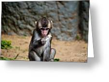 Japanese Macaque Monkey Greeting Card