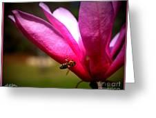 Japanese Magnolia Bloom Greeting Card
