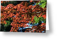 Japanese Maple Canopy Greeting Card