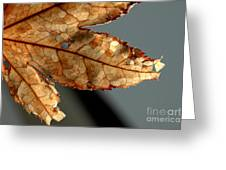 Japanese Maple Leaf Brown - 2 Greeting Card