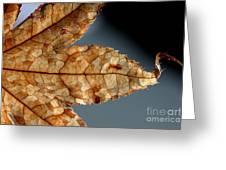Japanese Maple Leaf Brown - 1 Greeting Card