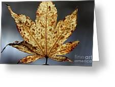 Japanese Maple Leaf Brown - 3 Greeting Card