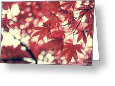 Japanese Maple Leaves - Vintage Greeting Card