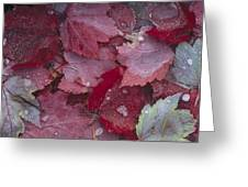 Japanese Maple Leaves With Frost Greeting Card