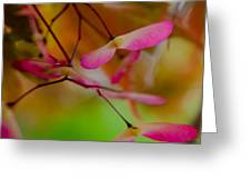 Japanese Maple Seedling Greeting Card