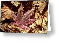 Japanese Maple Tree Leaves Greeting Card