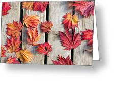 Japanese Maple Tree Leaves On Wood Deck Greeting Card