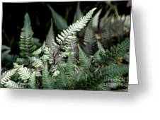 Japanese Painted Fern Greeting Card