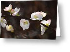 Japanese Quince 2 Greeting Card