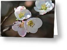 Japanese Quince 4 Greeting Card