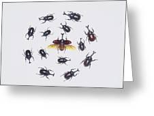 Japanese Rhinoceros Beetle Males Greeting Card