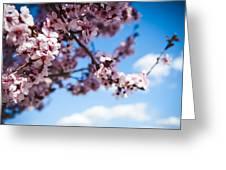 Japanese Sakura Greeting Card