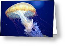 Japanese Sea Nettle Chrysaora Pacifica Greeting Card