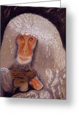 Japanese Snow Monkey Greeting Card by David Hawkes